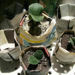 Χάρτινα γλαστράκια για σπόρους