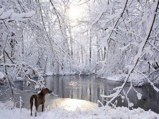 Δέκα φωτογραφίες του Ιανουαρίου