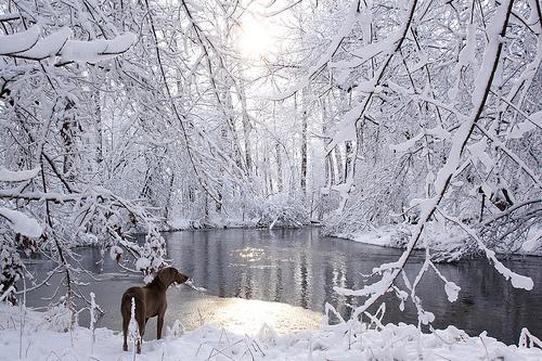 Δέκα φωτογραφίες του Ιανουαρίου - Είμαστε πλέον στο δεύτερο δεκαπενθήμερο του Ιανουαρίου και είμαστε σε αναμονή για τις ηλιόλουστες αλκυονίδες ημέρες που δε λένε ακόμα να φανούν.