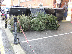 Στόλισε κλαδί πεύκου για χριστουγεννιάτικο δέντρο, η τζάμπα λύση - Δεν έχεις φράγκο για χριστουγεννιάτικο δέντρο; μη μασάς! εμείς είμαστε εδώ! Το έχουμε ξαναζήσει το στόρυ και έχουμε λύση