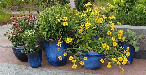 gardening Είναι πολυέξοδη ασχολία η κηπουρική σε γλάστρες;