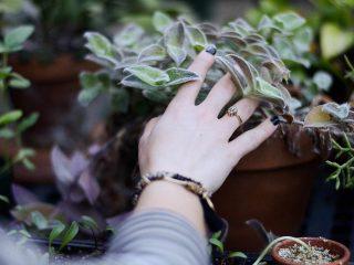 Πλαστικές γλάστρες ή πήλινες γλάστρες για τα φυτά σας;