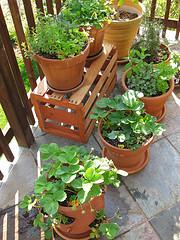 glastres Πλαστικές γλάστρες ή πήλινες γλάστρες για τα φυτά σας;