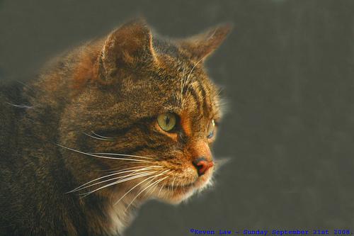 Ειδικός Ποινικός Κώδικας για την προστασία των ζώων - Θα θεσπιστεί Ειδικός Ποινικός Κώδικας για την προστασία των ζώων που θα επιβάλλει κυρίως οικονομικές ποινές σε όσους κακοποιούν η θανατώνουν σκοπίμως ζώα