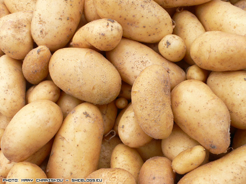 patates2009 Οι πρώτες Πατάτες