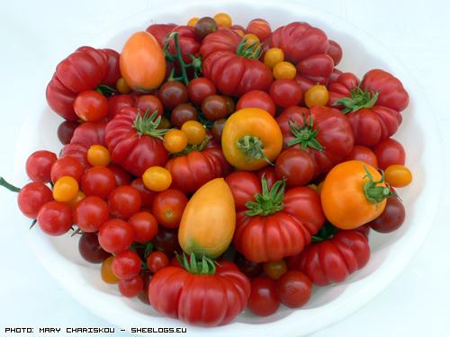Πολύχρωμες παραδοσιακές ντομάτες - Φέτος στο κτήμα οι ντοματιές μου ήταν πολύχρωμες. Οι πειραματισμοί μου με παραδοσιακές χρωματιστές ποικιλίες ντομάτας είχαν μεγάλη επιτυχία