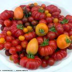 Πολύχρωμες παραδοσιακές ντομάτες
