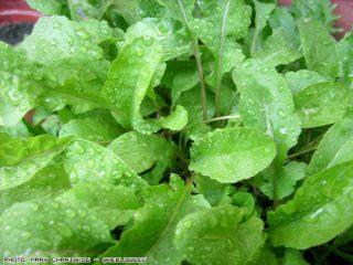 Τι λαχανικά να φυτέψετε το Σεπτέμβρη