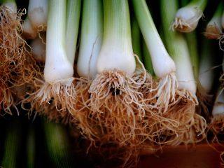 Τι λαχανικά να φυτέψετε τον Οκτώβριο