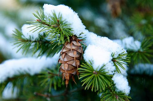 Καφέ χριστουγεννιάτικα στολίδια - Προσέξατε τα καφέ χριστουγεννιάτικα στολίδια που βγήκαν στη μόδα φέτος;
