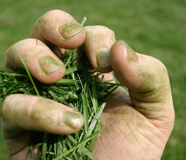 Οι πρασινοδάχτυλοι - Για να γίνεται πρασινοδάχτυλος δε χρειάζονται μαγικά φίλτρα, θετική διάθεση και αγάπη για τα φυτά χρειάζεται απλά.