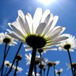 Ο καιρός το Μάρτιο: 15 παροιμίες