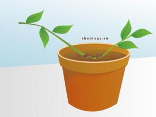 Πολλαπλασιασμός φυτών με καταβολάδες