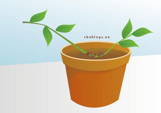 katabolades Πολλαπλασιασμός φυτών με καταβολάδες