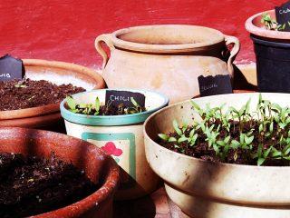 Τι λαχανικά να σπείρω το Μάρτιο