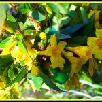 Πονοκέφαλοι, ημικρανίες και βότανα