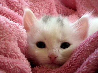 Πρώτη φορά γατάκι στο σπίτι, τι να αγοράσω;