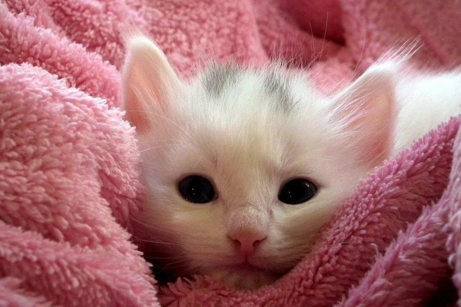 a6b1f45472df Πρώτη φορά γατάκι στο σπίτι