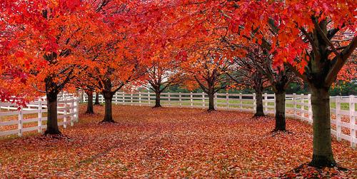 red leaves Μαζέψτε τα φύλλα των δέντρων για τις γλάστρες σας