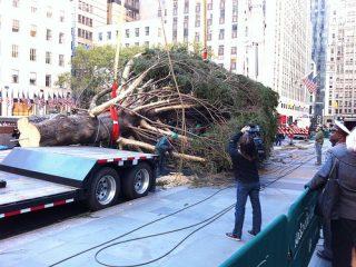 Ετοιμάζεται το χριστουγεννιάτικο δέντρο του εμπορικού κέντρου Rockefeller