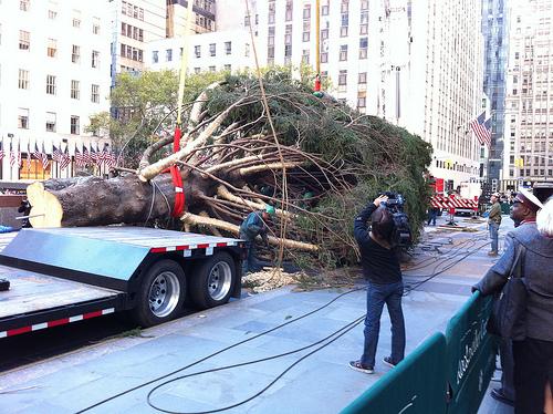 Ετοιμάζεται το χριστουγεννιάτικο δέντρο του εμπορικού κέντρου Rockefeller - Το φετινό χριστουγεννιάτικο δέντρο βρέθηκε και μεταφέρθηκε στο εμπορικό κέντρο για να στολιστεί με χιλιάδες λαμπιόνια. Δείτε το βίντεο