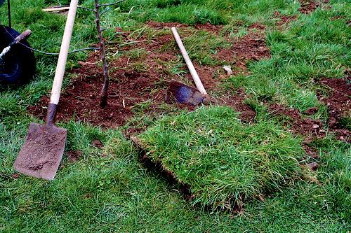 Το γκαζόν το τρώνε τα γελάδια - Μήπως ήρθε η ώρα να ξυλώσεις το γκαζόν για να φτιάξεις έναν λαχανόκηπο; Κι αν επιμένεις για πρασινάδα... μάθε να καλλιεργείς την αγριάδα!