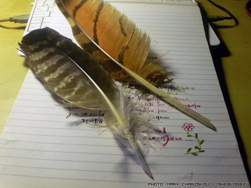 πένα φτερού