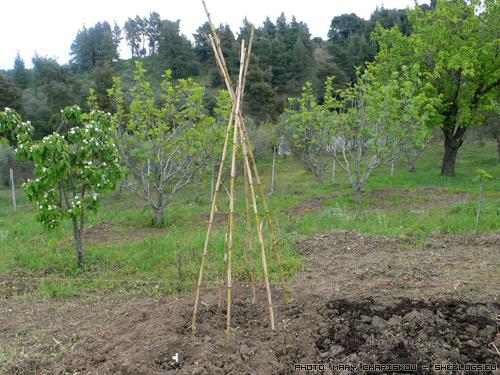 Το ματζικοκτήμα τον Απρίλη - Για να μη νομίζετε ότι μόνο γράφουμε για κηπουρική και δε σκάβουμε....