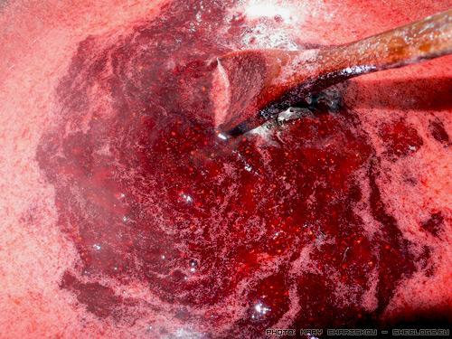 Μαρμελάδα Φράουλα - Μια και είμαστε στην εποχή όπου κατεβαίνει σχετικά η τιμή της φράουλας πάμε να δούμε πως φτιάχνεται η μαρμελάδα φράουλα