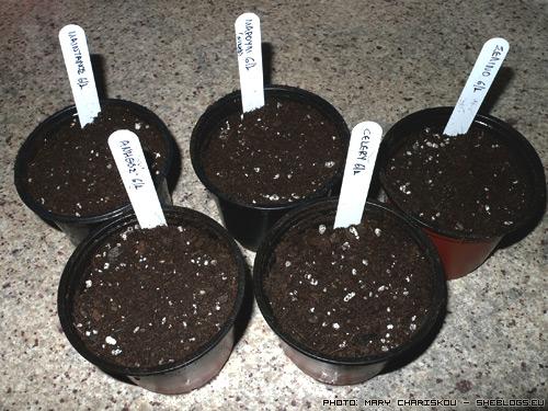 Η πρώτη σπορά για το καλό του χρόνου - Σπέρνουμε  τους πρώτους σπόρους της χρονιάς για να γεννηθεί η ελπίδα για μια καλή χρονιά μαζί με τα πρώτα πράσινα φυλλαράκια που θα δουν το φως του γενάρη