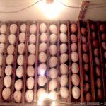 Αυτοσχέδια Κλωσσομηχανή – Θερμομάνα για κότες και άλλα πτηνά