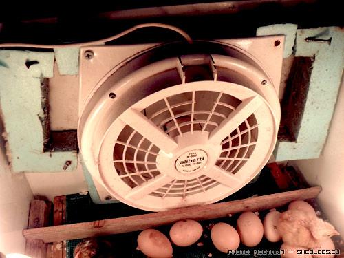 klosomixani 21 Αυτοσχέδια Κλωσσομηχανή   Θερμομάνα για κότες και άλλα πτηνά