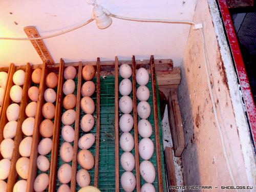 klosomixani 41 Αυτοσχέδια Κλωσσομηχανή   Θερμομάνα για κότες και άλλα πτηνά
