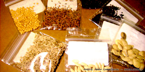 seeds Ανταλλαγές Παραδοσιακών Σπόρων Λαχανικών
