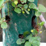 Κάθετη καλλιέργεια στο μπαλκονάκι!