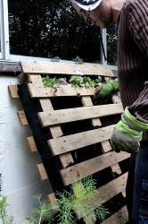 Κάθετη καλλιέργεια στο μπαλκονάκι! - Εάν το μπαλκονάκι σου ίσα που χωράει μισή καρέκλα, κρέμασε στον τοίχο μια τσαντούλα με τσέπες ή μια ξύλινη παλέτα και γέμισέ την λουλούδια, βότανα και ζαρζαβατικά!