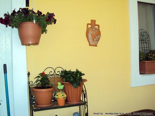 H βεράντα της Φωτεινής - Στο sheblogs.eu μας αρέσει να παρουσιάζουμε τις δικές σας προσπάθειες! Πάμε να δούμε την ολοπράσινη βεράντα της αναγνώστριας μας Φωτεινής.