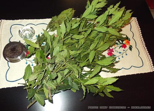Ξεραίνω δαφνόφυλλα - Ολο και κάποιο δέντρο δάφνης θα βρεις για να του κλέψεις λίγα φύλλα να ξεράνεις για την κουζίνα σου, δε χρειάζεται να αγοράζεις κουτάκια με φύλλα δάφνης