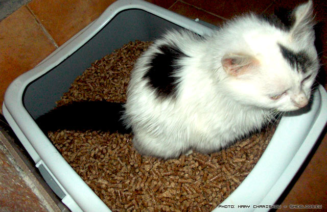 "Pellets, η τέλεια ""άμμος"" γάτας  - Αν βαρεθήκατε την άμμο γάτας που βρωμάει ή κουραστήκατε να ξοδεύεστε, καιρός να δοκιμάσετε τα πέλλετς καύσης."