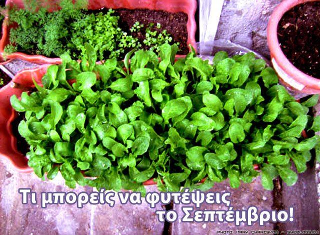 Τι φυτεύω το Σεπτέμβριο στον κήπο και τις γλάστρες μου