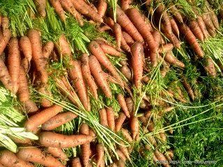 Τα υπέροχα καρότα από το μπαξέ της Ρούλας