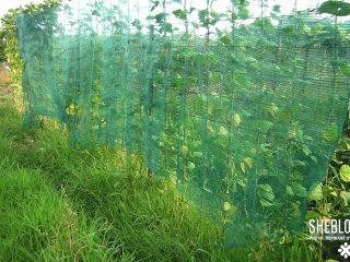 Προστάτευσες τα φυτά σου από τον καύσωνα το καλοκαίρι;