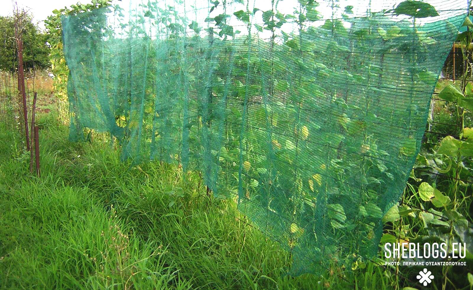 Μήπως ο λαχανόκηπος σου σταμάτησε να παράγει καρπούς;