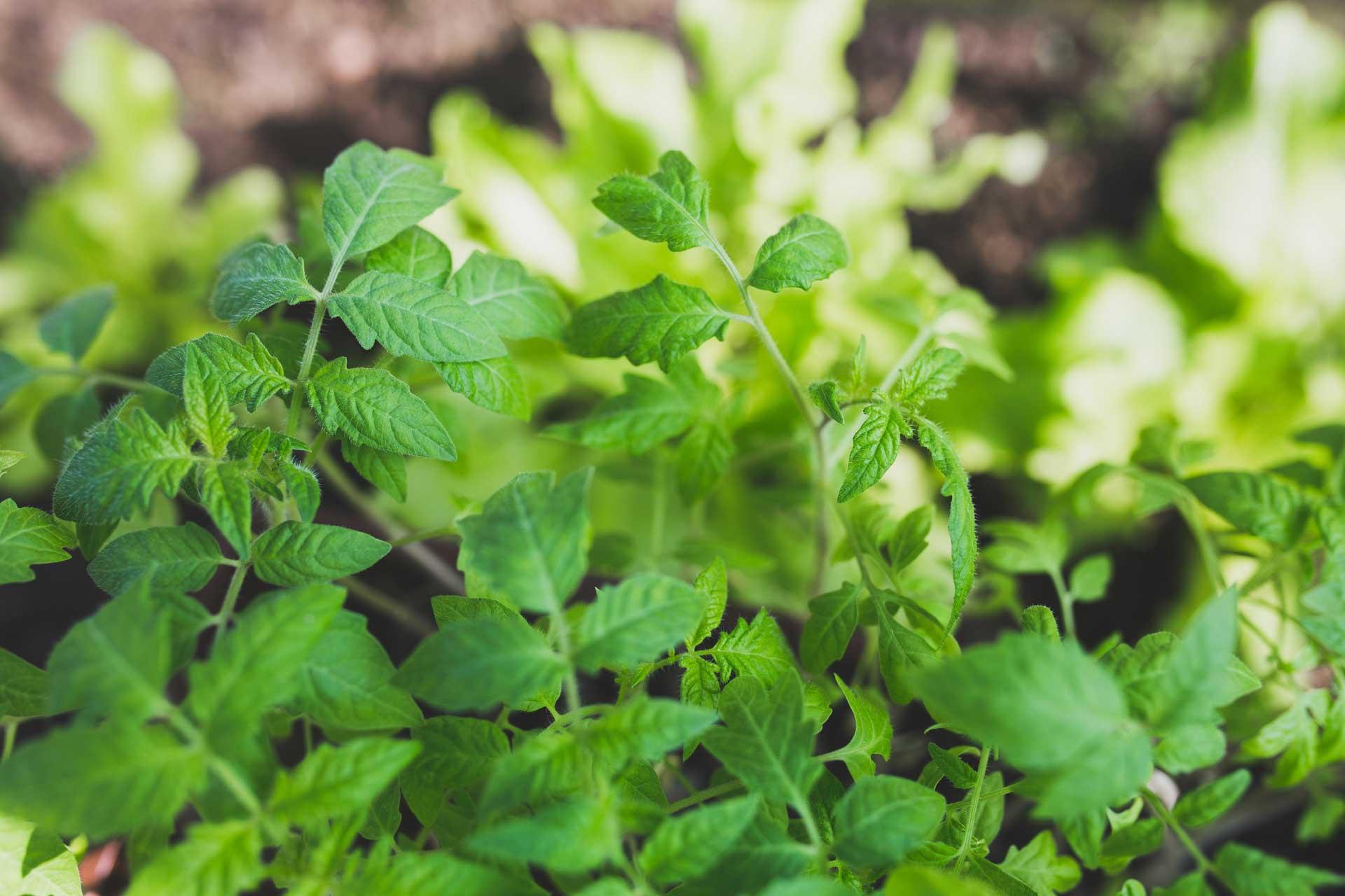 Τι λαχανικά να σπείρω και να φυτέψω τον Απρίλιο